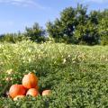 Pesticides et nitrates : que faut-il en penser ?